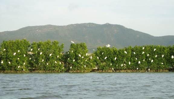 Hệ sinh thái thực vật và động vật tạo nên sự phong phú cho hệ sinh thái rừng ngập mặn.