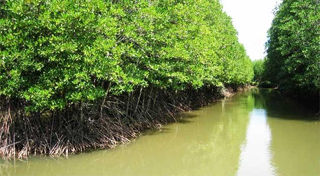 Khí hậu, địa hình, thủy văn và độ muối trong rừng tạo điều kiện cho hệ sinh thái rừng ngập mặn phát triển.