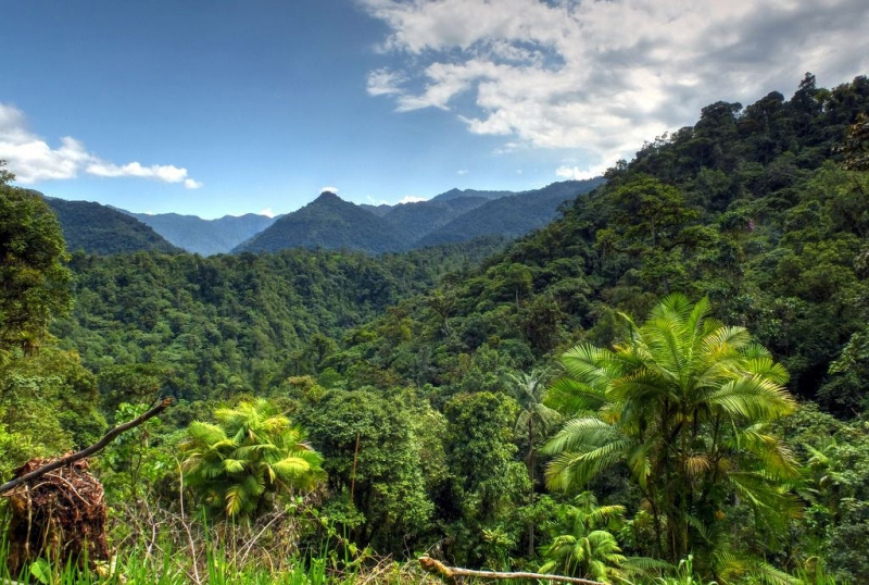 Một góc rừng Mindo - Nambillo