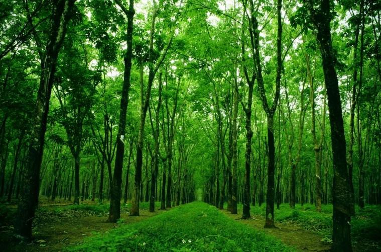 tài nguyên rừng