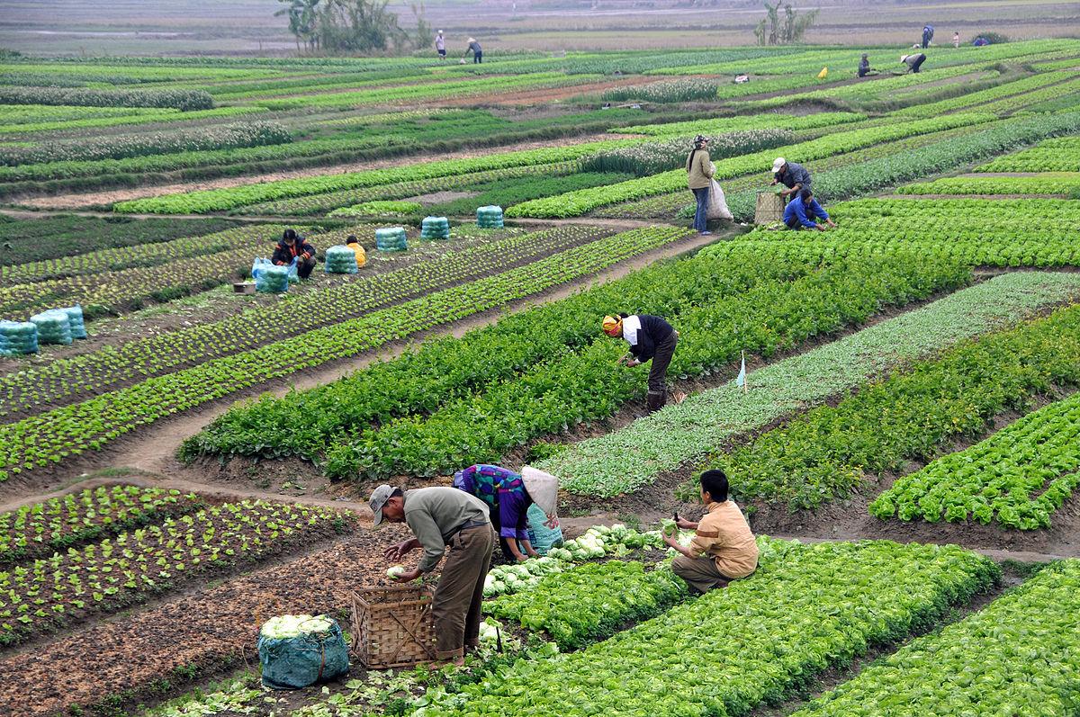Sản xuất nông nghiệp là gì ? - Nông nghiệp là gì ?
