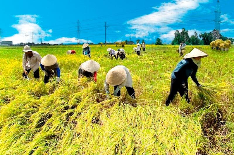 Sản xuất nông nghiệp là gì? Những đặc điểm của sản xuất nông nghiệp