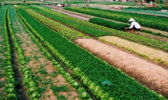 Sản xuất nông nghiệp là gì ? - Ngành nông nghiệp là gì ?