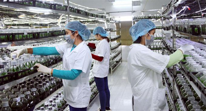 Ứng dụng khoa học công nghệ trong nông nghiệp: Chưa kịp với yêu cầu phát  triển - Hànộimới