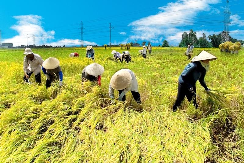 Bạn có biết học xong ngành nông nghiệp ra làm gì?