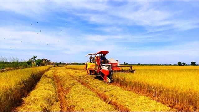 Ngành Nông nghiệp Việt Nam đứng trước những cơ hội và thách thức của hội  nhập kinh tế quốc tế
