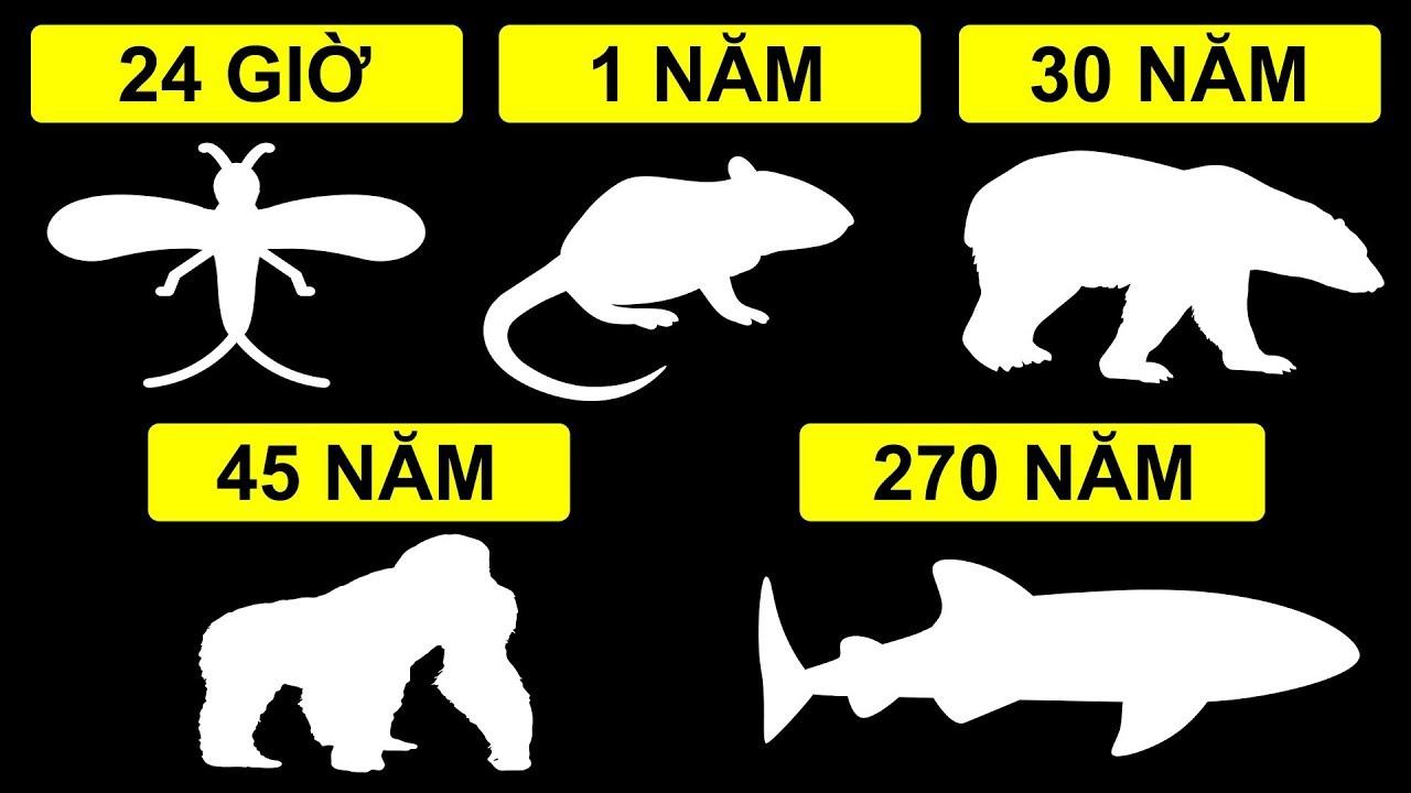 Những động vật sống thọ