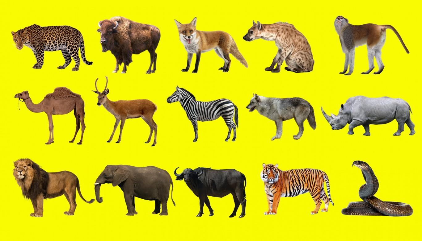 Những động vật to nhất trên cạn