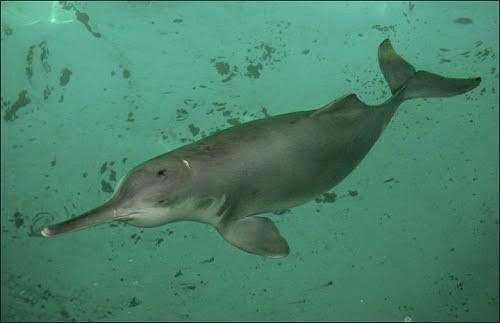 sinh vật biển nguy cấp