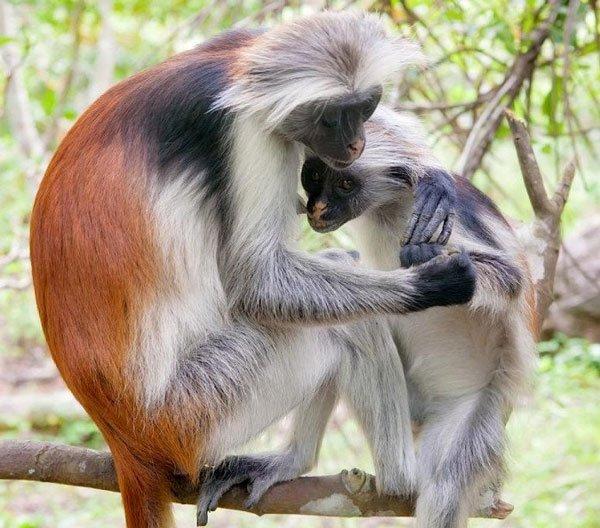 động vật đẹp nhất thế giới
